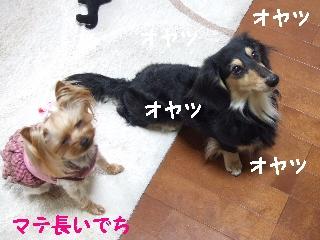 2009_0401 はる0086.jpg
