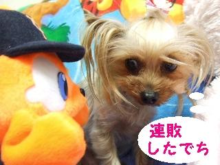 2009_0404 はる0011.jpg