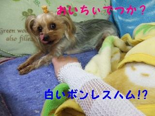 2009_0404 はる0013.jpg