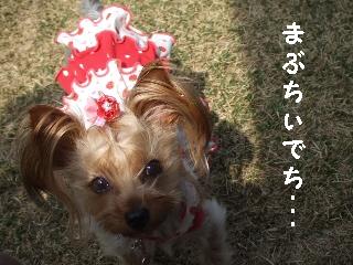 2009_0408 はる0037.jpg
