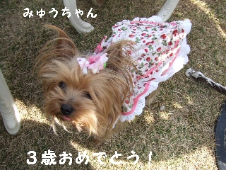 2009_0408 はる0050.jpg