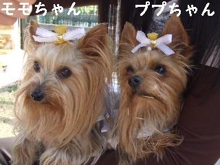 2009_0408 はる0051.jpg