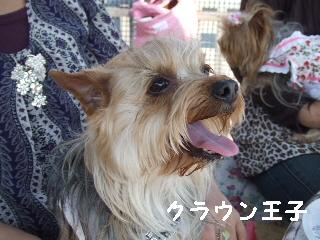 2009_0408 はる0056.jpg