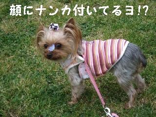 2009_0427 はる0036.jpg