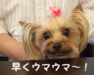 2009_0601 はる0007.JPG