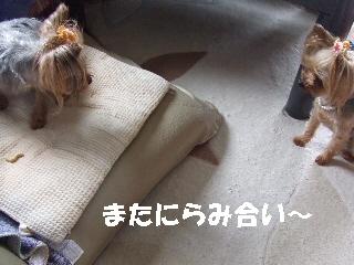 2009_0704  はる0017.jpg