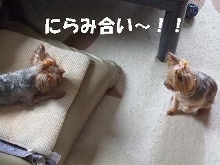 2009_0704 はる0008.jpg