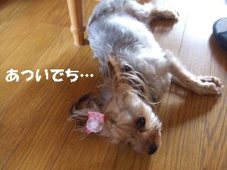 2009_0715 はる0012.jpg