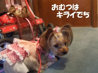 2009_0719 はる0047.jpg
