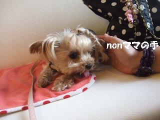 2009_0928 はる0087.jpg