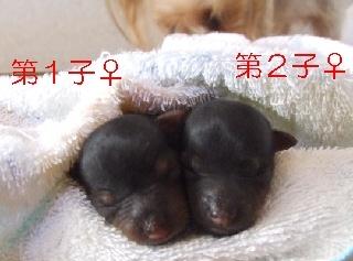 2009_1011 nanababy-3.jpg