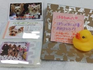 2010_1121はる0151.JPG