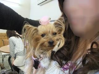 2011_0410はる0034.JPG