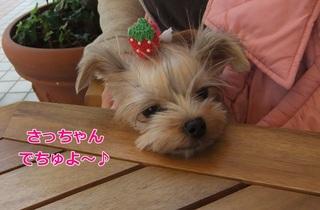 2011_11040010.JPG