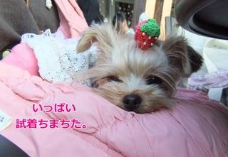 2011_11040022.JPG