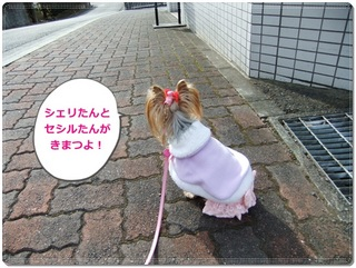 2012_01170001.JPG