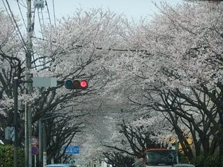 2012_04100049.JPG