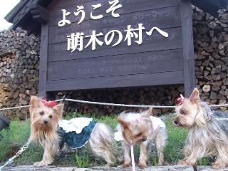 萌木の村.jpg